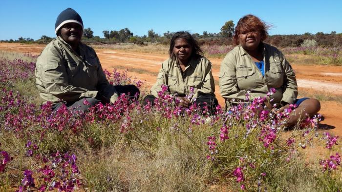Three Aboriginal ladies sitting on the ground outside and surrounded by purple flowers.