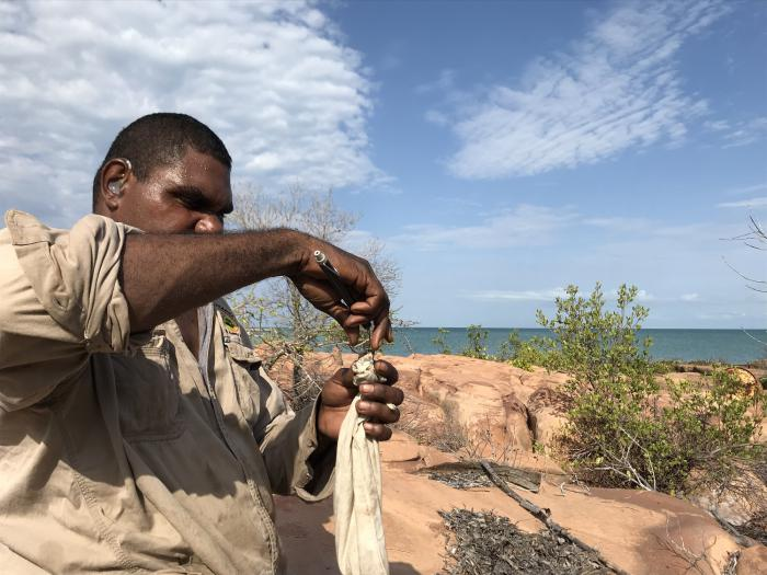 Aboriginal man in ranger uniform works on a rodent trap made of material and wire. In the background is rock, bushes, the sea and a blue and cloudy sky.