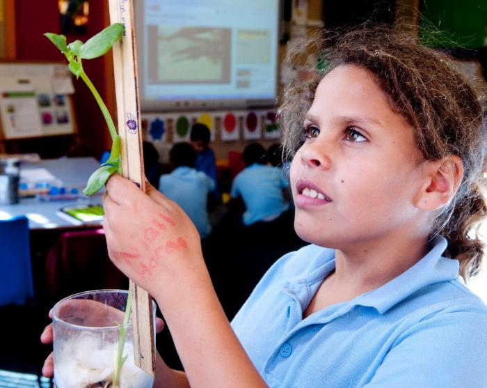Young girl in a classroom, holding a plant she has grown in class in cotton wool and measuring it with a ruler. There are other students and classroom items in the background.