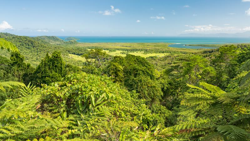 Image of rainforest in foreground and sea and sky in the background. At bottom are the words: World Ranger Day.