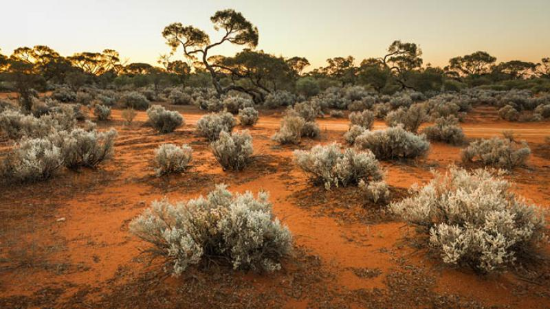 Red dirt and spinifex bushes in the foreground and trees in the background.