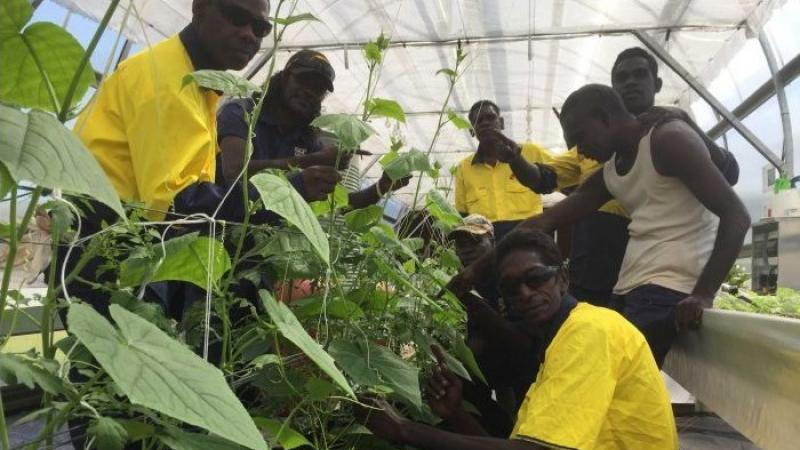 Several Indigenous men working with plants in a greenhouse.